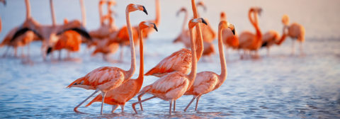 groep flamingos in water tropisch land